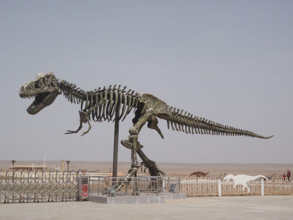 Dinosaur Fairly Land China Mongolia - T Rex