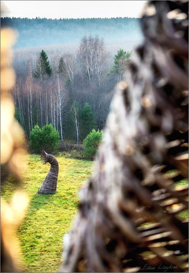Kaluga - Russia - Wonderland Gallery - Forest