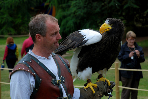 Steller's Sea Eagle - Biggest Eagle - With Human 2