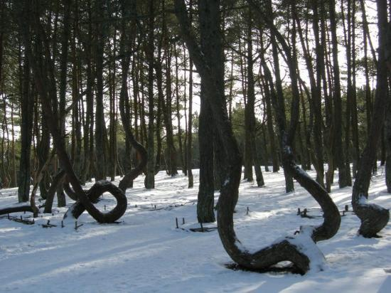 The Dancing Drunk Forest of Kaliningrad - Full Snow 2